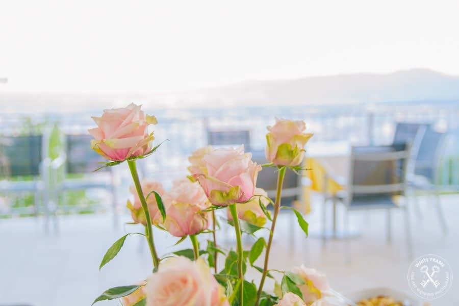 Rose esterne Belvedere